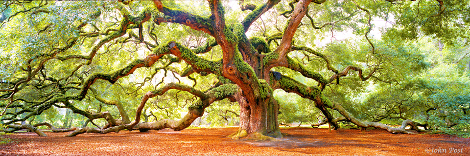 Angel Oak Tree South Carolina (c)JohnPost
